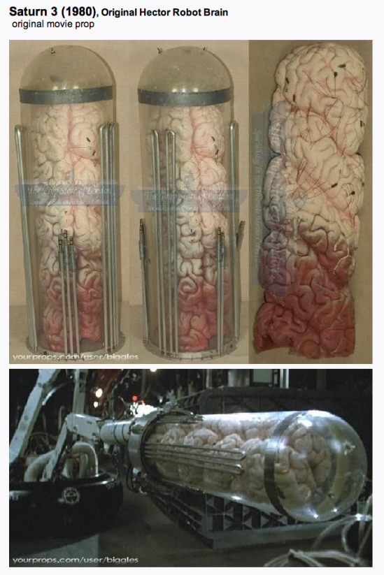 Hector's brain inside brain case prop. (photo courtesy yourprops.com)